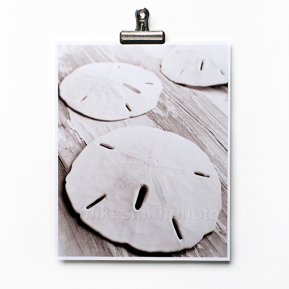 Black and white shell print of starfish, sand dollars, conch shell. Nautical decor beach house wall art by mike smith. Sepia tone black and white shell photo prints.