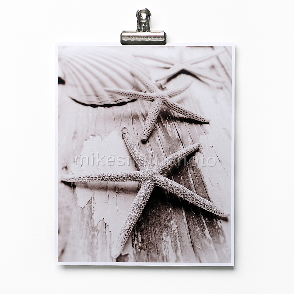 starfish shell print black and white sepia