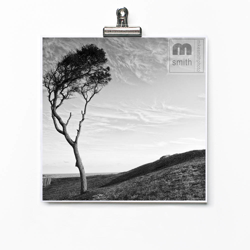 Black and white fine art photo print of tree  by ocean. Limited edition prints by mike smith photo. Landscape and seascape photography prints.