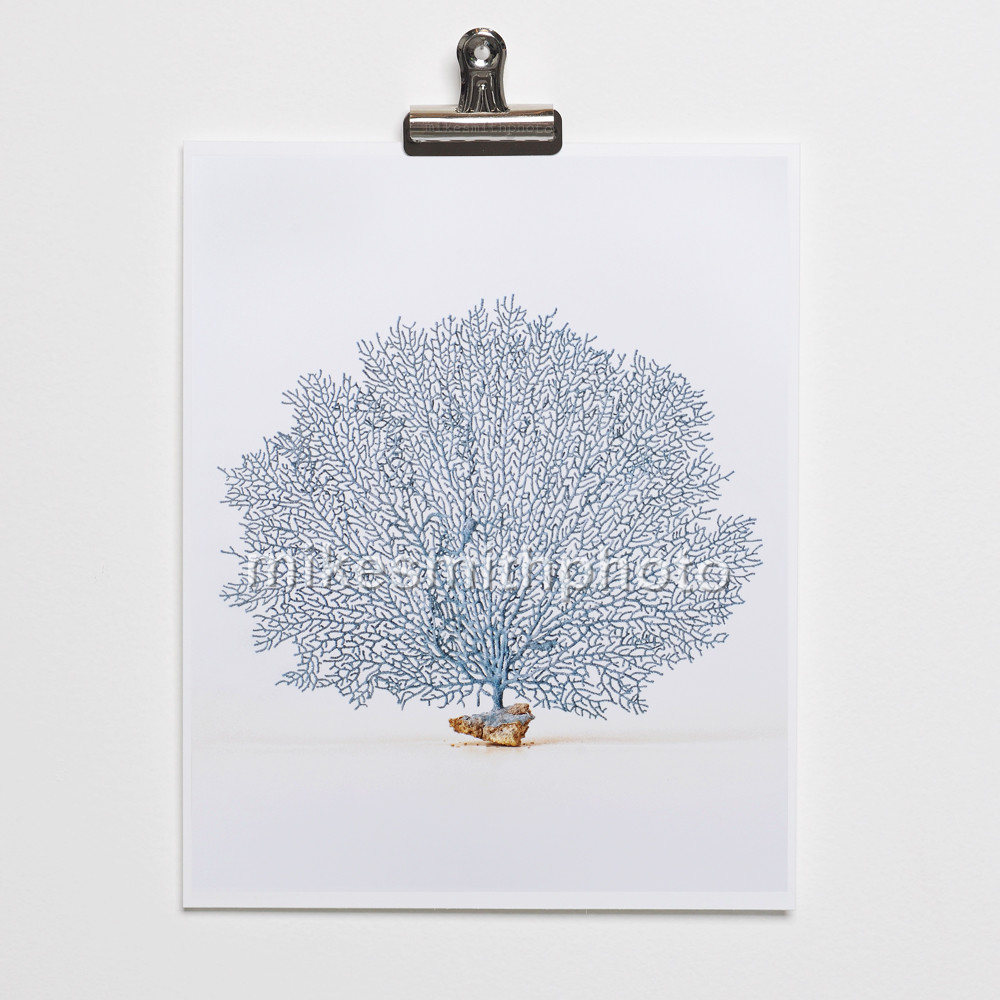 Sea fan coral print. Nautical beach house wall art great for coastal cottage decor. Sea fan photo print is modern with a vintage style. Part of the Sea Life series that looks great grouped together.